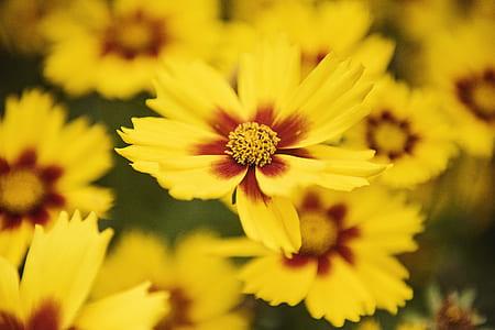 Macro Photography of Yellow Flowers