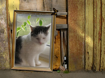 brown wood-framed painting of white and black cat