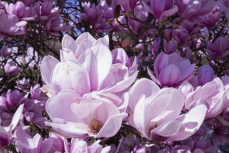 blooming purple petaled flowers