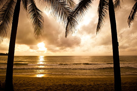silhouette of two coconut trees at golden hour