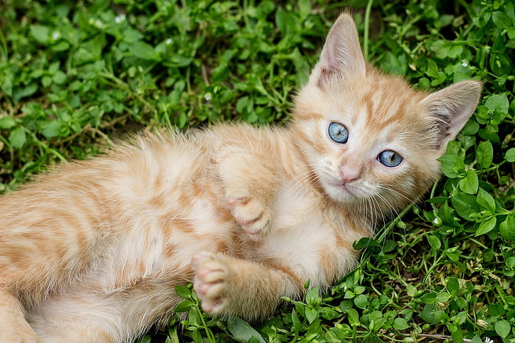 orange tabby kitten on grass