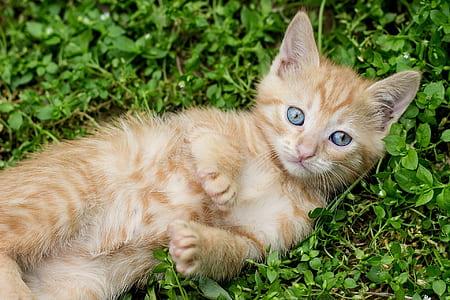 orange tabby kitten on grass