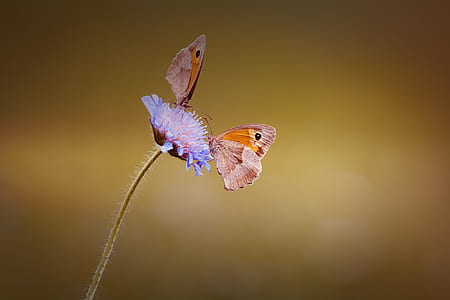 macro photography of brown butterflies on purple flower