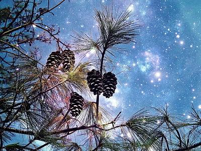 pinecone tree illustration