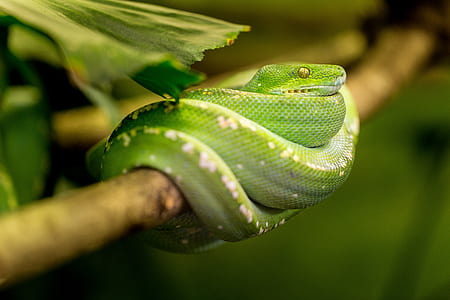 green snake on brown tree twig