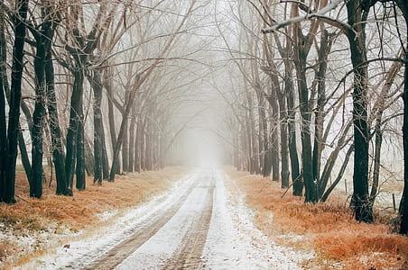 road between bare trees