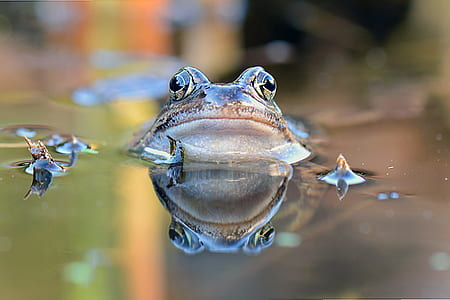 selective focus photography of brown frog on body of water