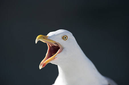 white seagull