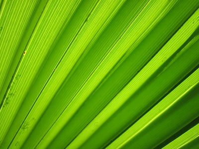 background, detail, flora, green, leaf, macro