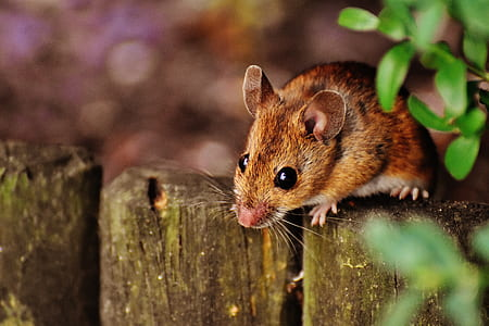 rodent on fence
