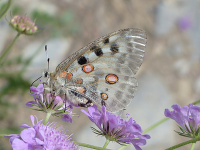 beige and black spotted butterfly perched on purple flower macro photography