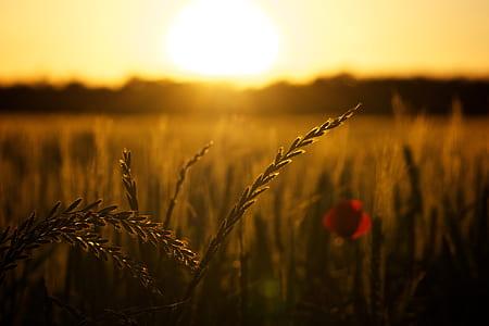 macro photography of grains