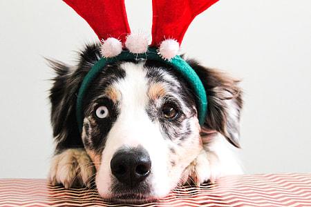 dog wearing reindeer headband