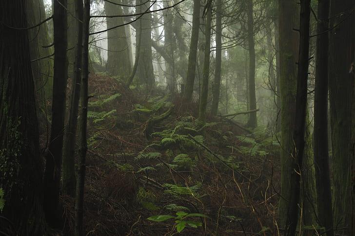 forest, green, tree, foggy, dark, nature