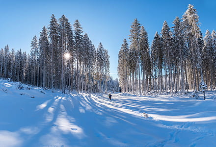 person standing on snow near trees during daytime