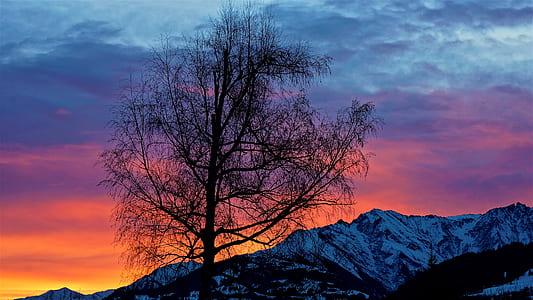 leafless tree with mountain horizon view