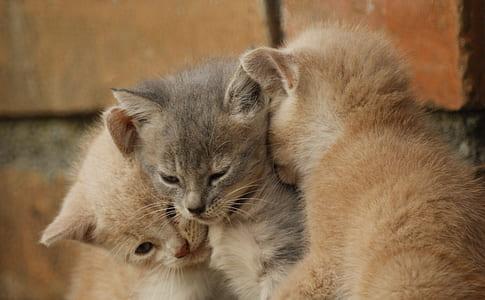 gray and two orange tabby kittens beside concrete bricks