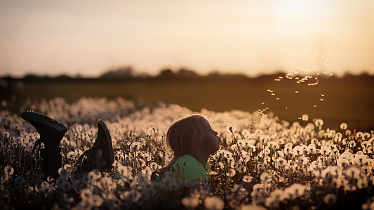 girl in green shirt and Converse sneakers lying on flower field while blowing petals of a Dandelion flower at sunset