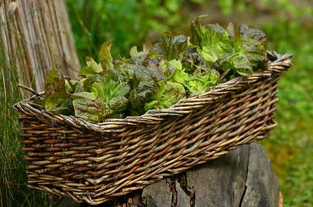 close-up photo of plant on basket