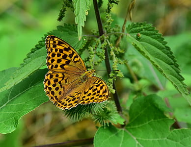 gulf fritillary butterfly perched on green plant