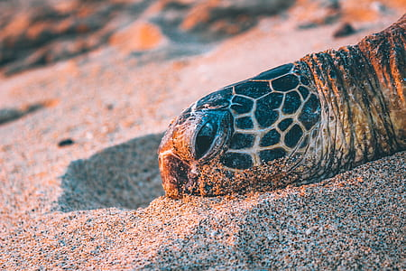 beige and black tortoise head on gray sand