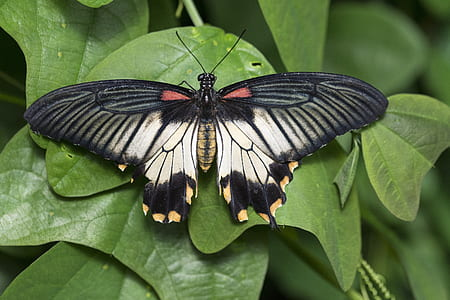 black and brown butterfly hover on green leaf
