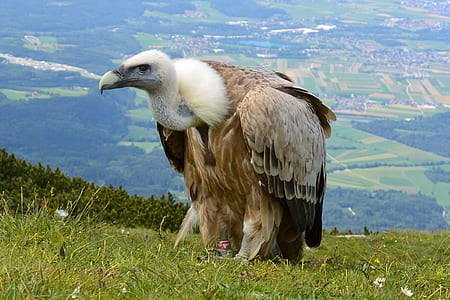condor on grass ground