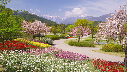 flower garden at daytime