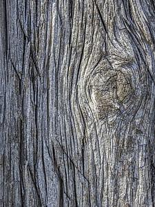 gray tree bark