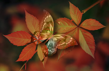 brown and multicolored swallowtail butterfly perched on red leaf closeup photography