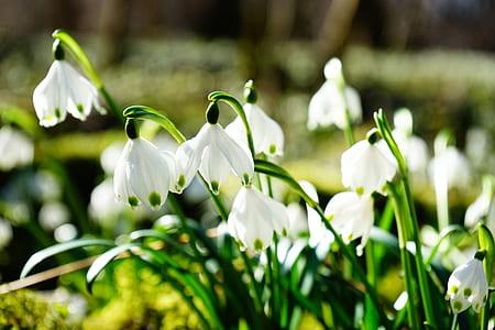 tilt shift photo of white petaled flowers