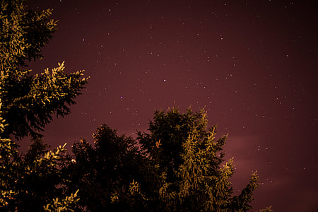 trees under clear sky