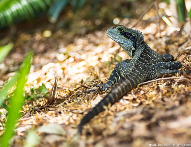 Black and Green Lizard during Daytime