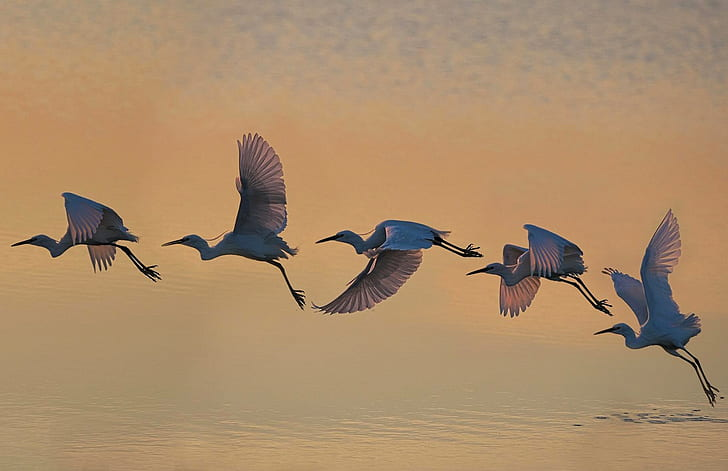 five bird flying above bodies of water