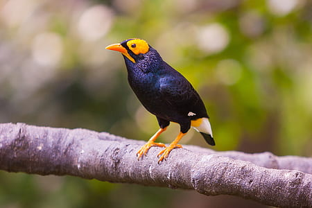 shallow focus photography of black and yellow bird on branch