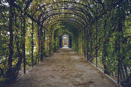 green and black garden arch