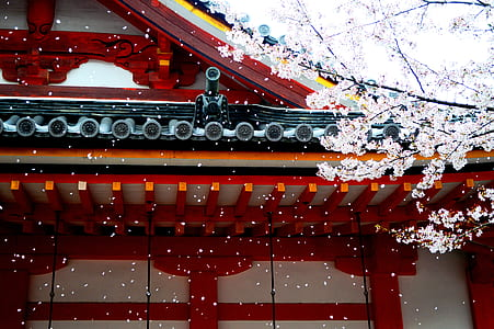 white and red wooden temple near white tree at daytime