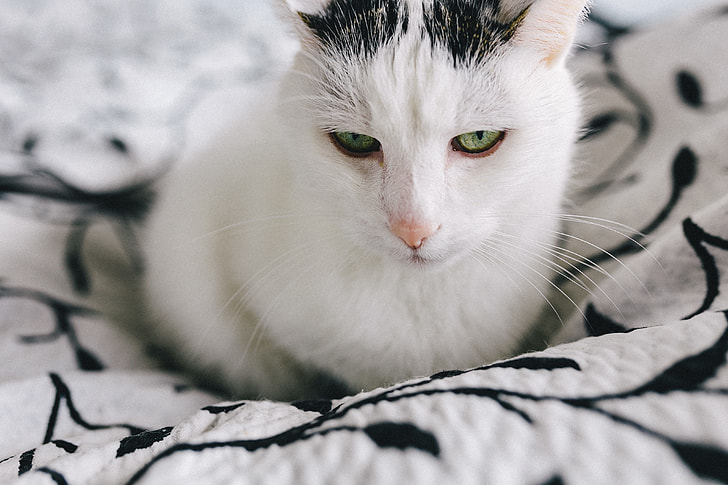 Portraits of white sad cat