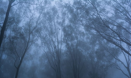 worm's eye photography of bare tree surrounded by fogs