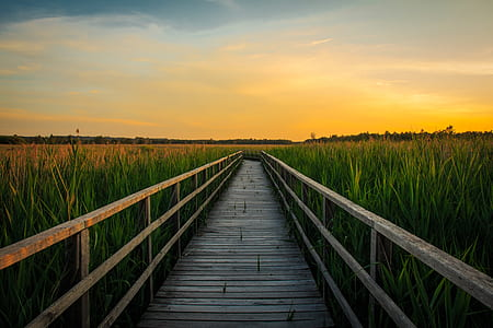 gray wooden bridge near green grass field