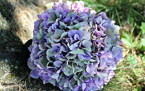 purple and green hydrangea flower bouquet on green grasses