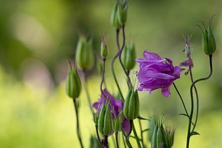 focus photo of purple petaled flowers