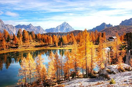 river between brown leaf trees