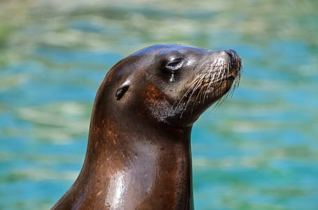 close-up photo of black sea lion