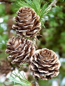 three brown pinecones at daytime