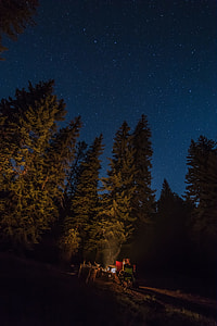 green pine trees photography during night time