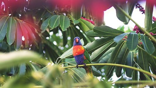 blue, orange, and green bird on tree