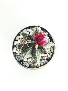 macro photography green cactus