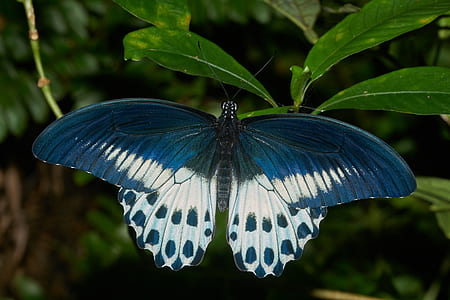 blue and white butterfly on green leaf plant