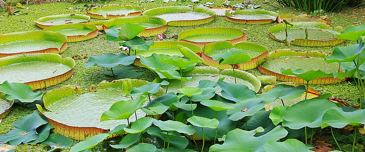 green lili plant on body of water